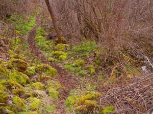 Eckles Creek Trail
