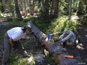 Working the crosscut